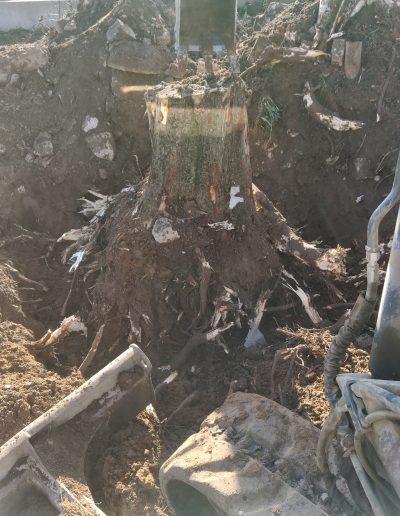 dessouchage d'un tronc d'arbre